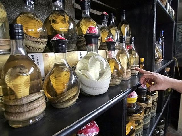 Алкогольный укус: нападение змеи из бутылки