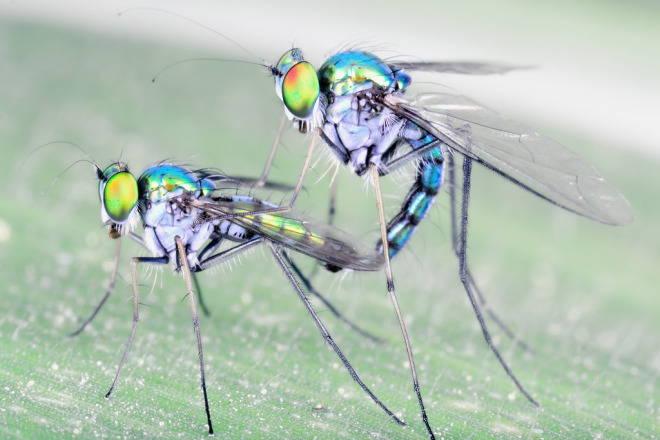 5 фактов о сексе насекомых