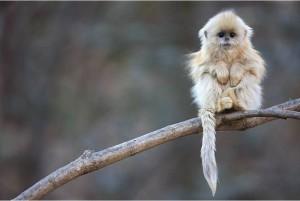 Интересный факт про обезьян