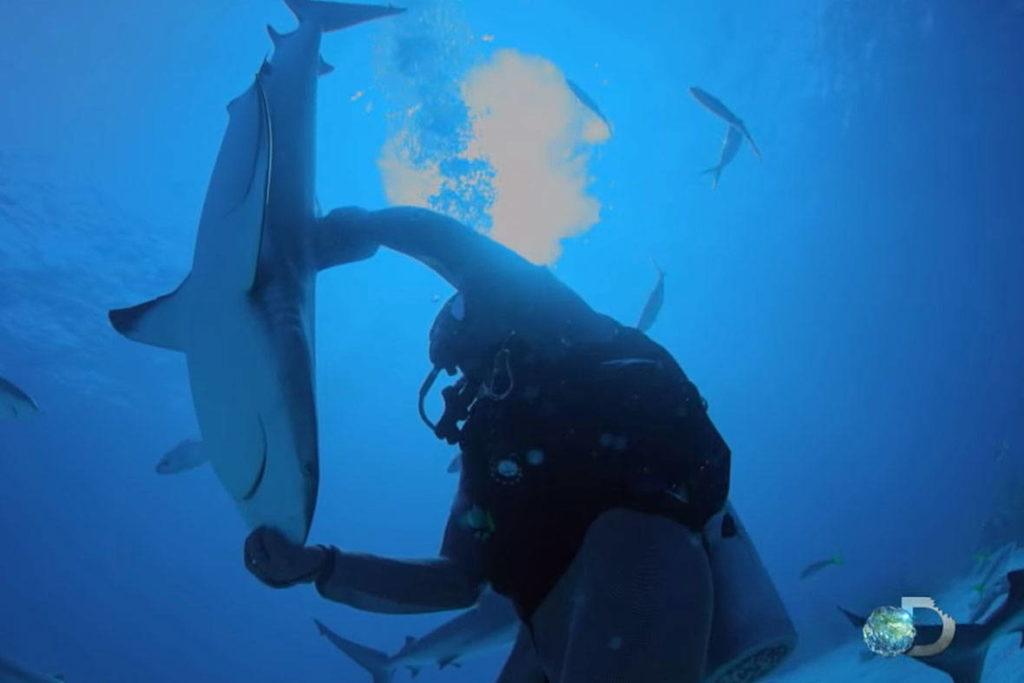 Человек управляет акулой