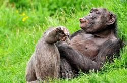 интересное видео про обезьян