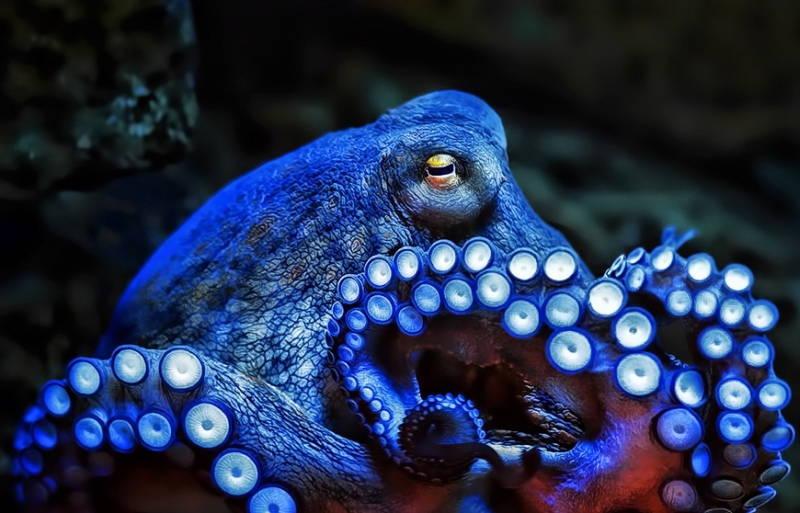 5 интересных фактов об осьминогах