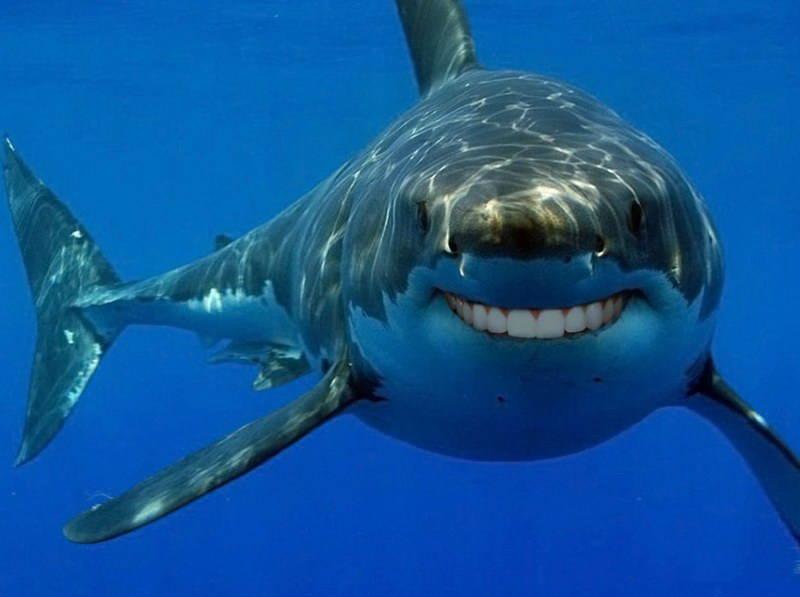 интересный факт об акулах