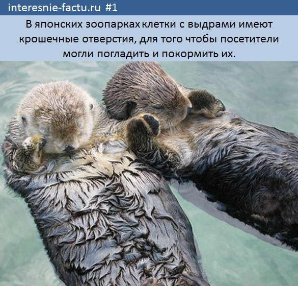 самые интересные факты фото1