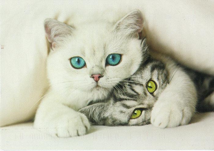 интересные факты о кошках-1