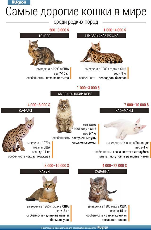 интересные факты о кошках 2