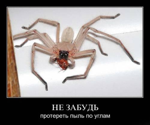 интересные факты о пауках - конец