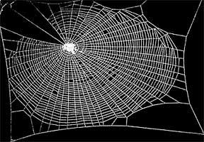 интересный факт о пауках