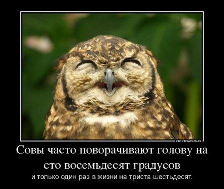 Интересные факты из жизни птиц