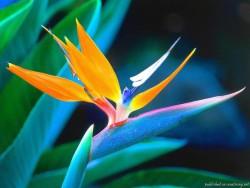Интересные факты о растениях фото