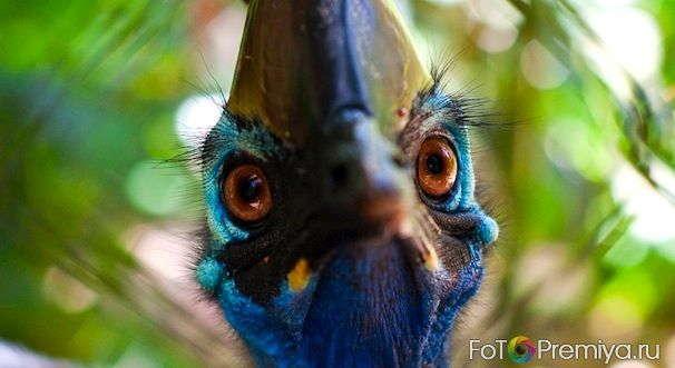 интересные факты о животных Австралии