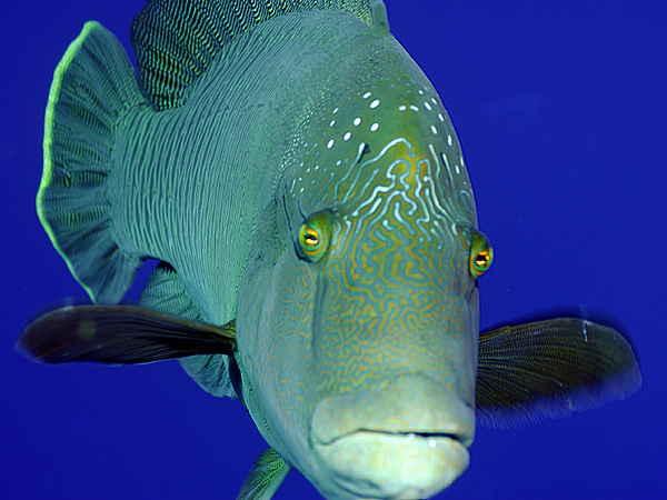 самые интересные факты о рыбах