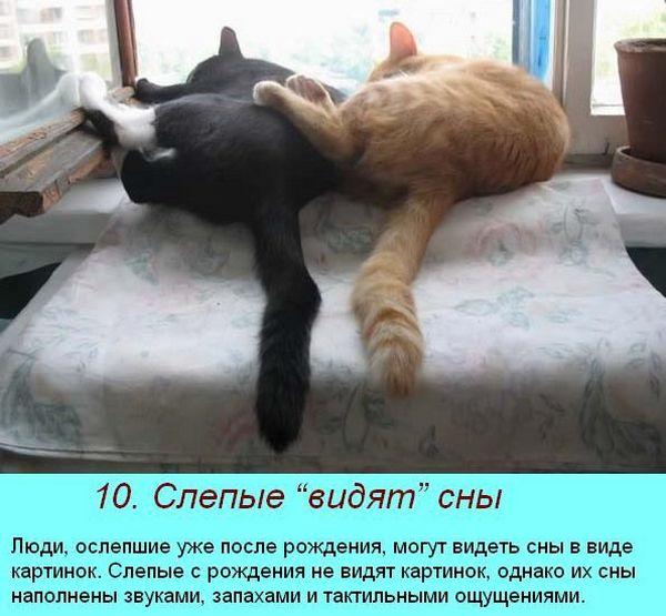 интересные факты о сне 7