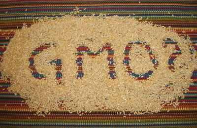 GMO_rice