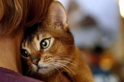 12 интересных фактов о вашей кошке