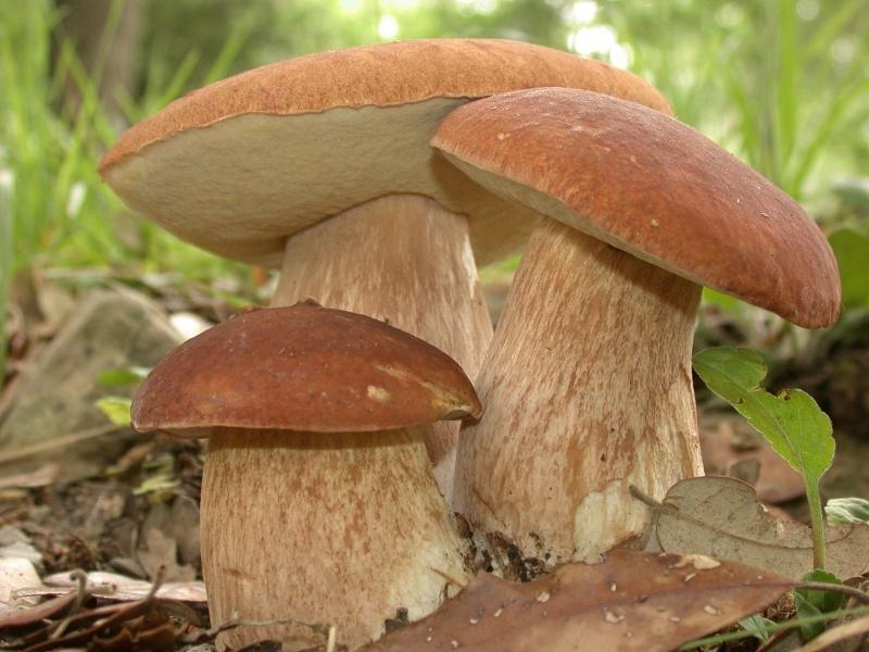 интересные факты о грибах 3