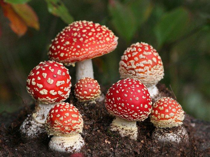 интересные факты о грибах 2