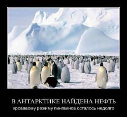 Антарктида интересные факты 3