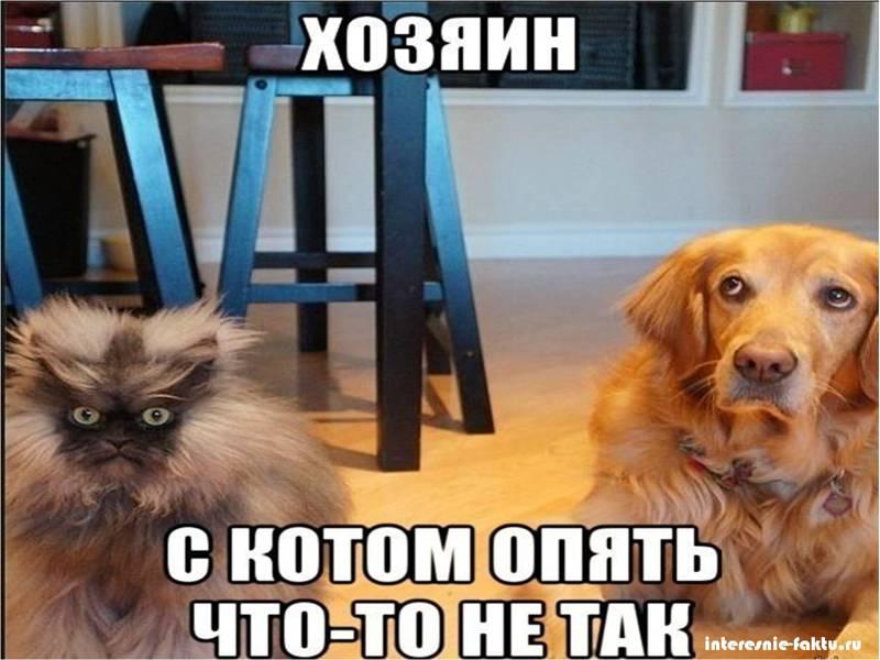 Животный юмор 1