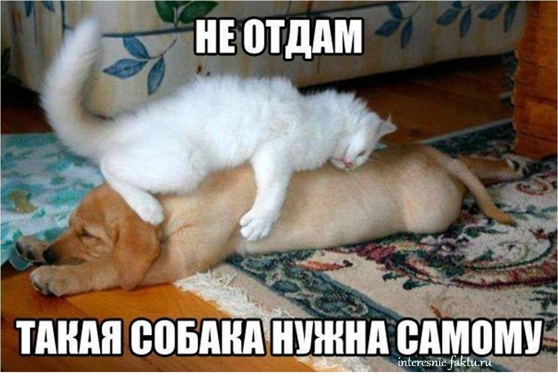 Юморной кот 1