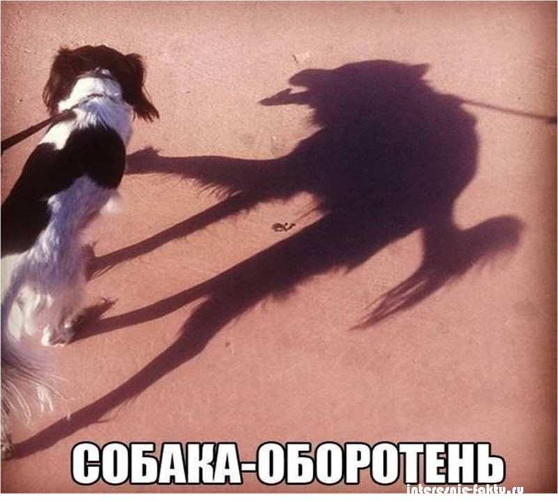 Животный юмор 2