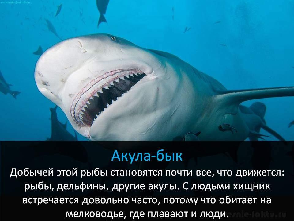 Самое смертоносное животное - акулы