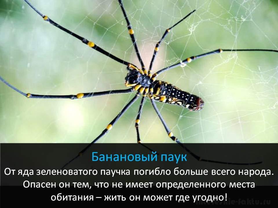 Самое смертоносное животное - пауки