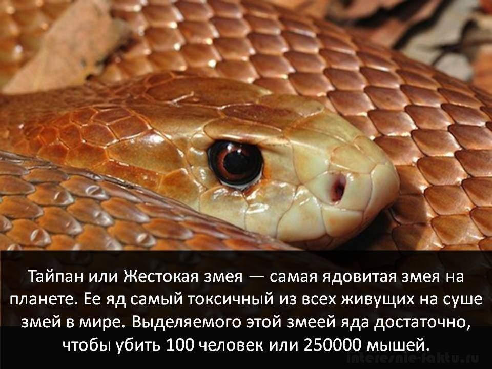Самое смертоносное животное - змеи