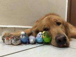 Пес, 8 птиц и один хомяк