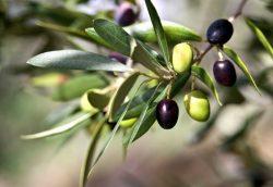 Убрать горечь из оливок