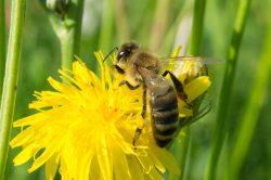 Пчелы умеют считать