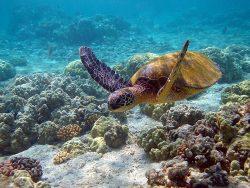 Ученые нашли способ защитить морских черепах от глобального потепления