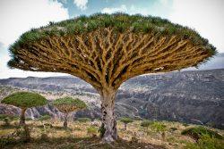12 уникальных деревьев, которые обязательно надо увидеть