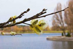 Признаки наступления весны