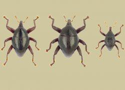 Ученые обнаружили более 100 ранее неизвестных видов жуков
