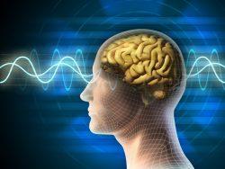 Как омолодить мозг и улучшить память?